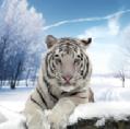 北�O虎模�M器最新版v1.0