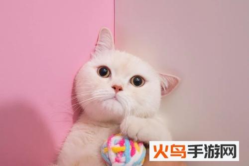 毛柚宠物app