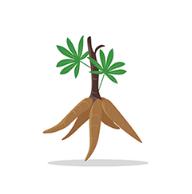 樟树中药材app安卓精简版v2.0