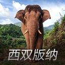 江城野象�A警appv1.0 最新版