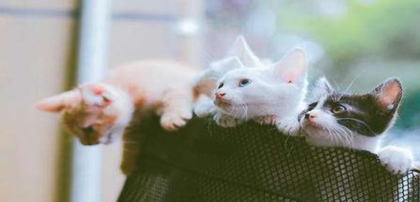 手机饲养猫软件