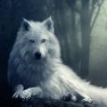 森林荒原狼模�M器v1.0